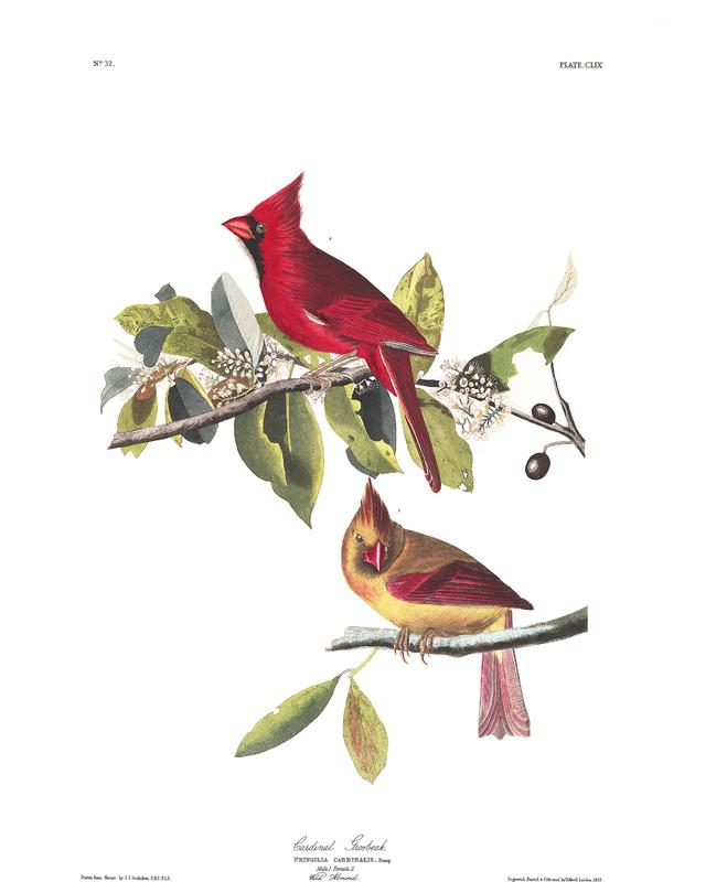 https://www.lehigh.edu/~inspc/Baseball/art/plate-159-cardinal-grosbeak-final.jpg