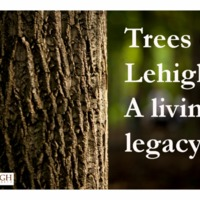 Trees of Lehigh main page title images