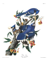 Reproductions from the National Audubon Society, The Birds of America; from original drawings