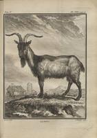 Histoire naturelle, g?n?rale et particuli?re, avec la description du Cabinet du roi?Vol. 5